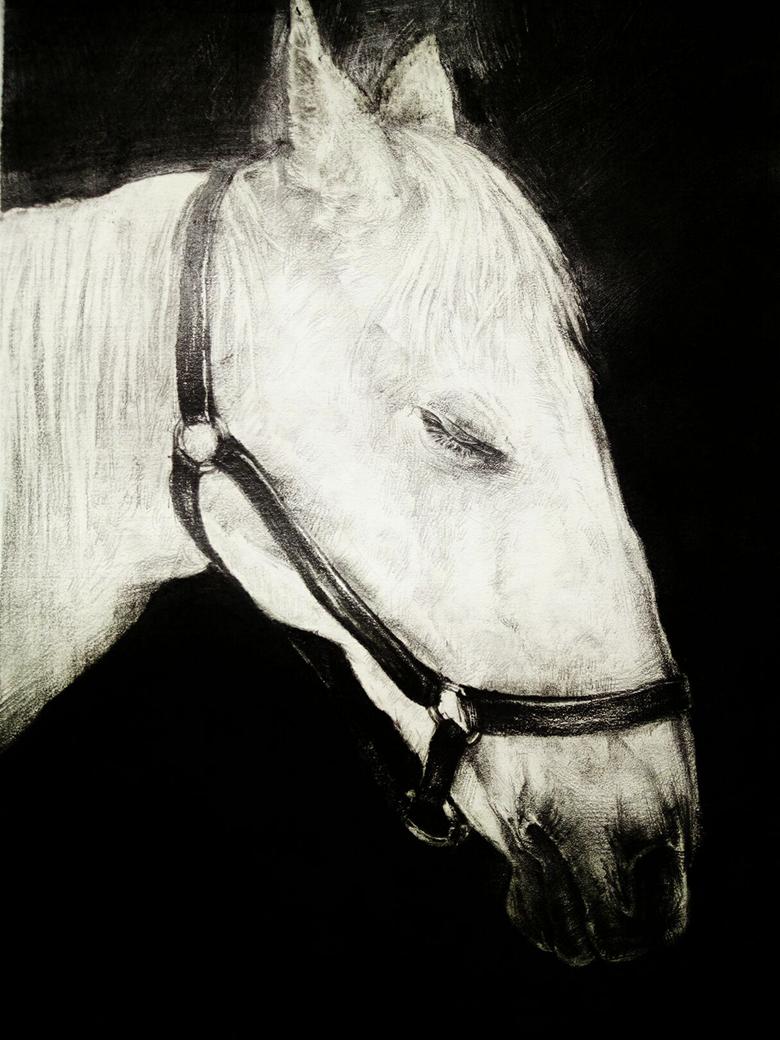 《马》――吴小宇