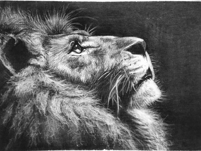 《狮子》  吕卓航